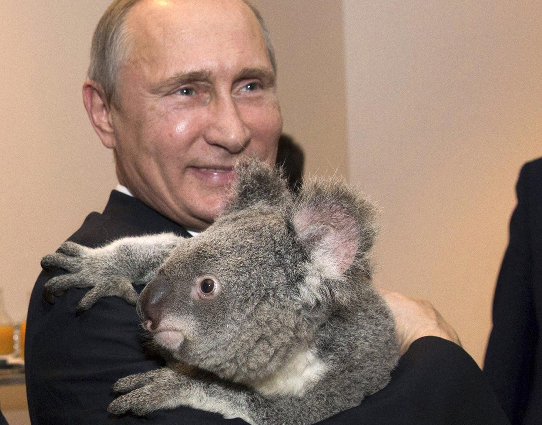 Сексуальные коалы картинки 15 фотография