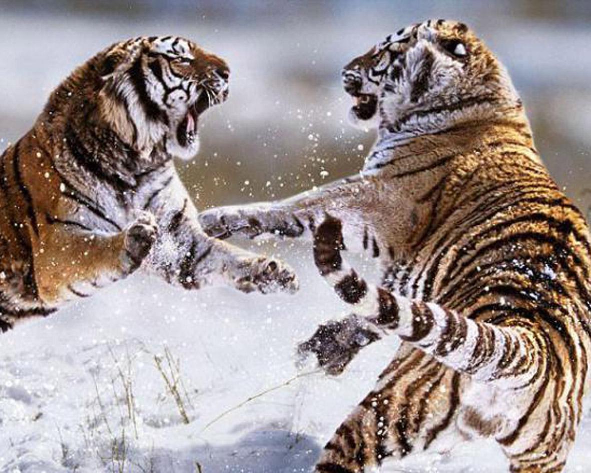 Фото природы животных россии 5